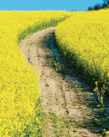 Sverige visar vägen, menar The Economists John Micklethwait och Adrian Wooldridge i en ny bok om framtidens stora utmaning. Foto: Jens Sølvberg / Samfoto / TT