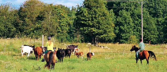 Neo testar jordbruksstöd hästar och blivande filéer Hanna Marie Björklund Neo nr 2 2012